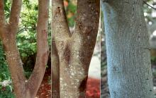 trunk and bark