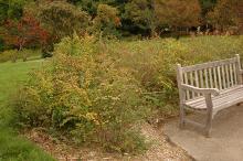 plant habit, fall