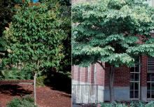 plant habit, after flowering