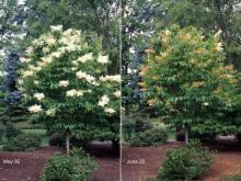 plant habit, flowering period