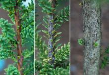 bark: twig, branch and trunk