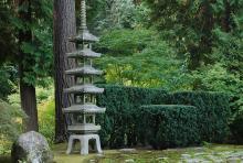 plant habit, hedge, Japanese garden