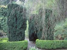 plant habit, formal landscape