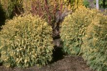 plant habit, winter
