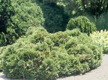 plant habit, several plants grown togeter