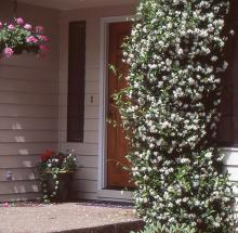 plant habit, flowering vine