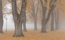 tree row, late fall