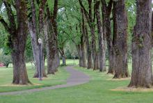 tree row, summer