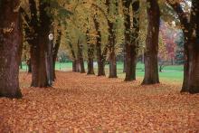 tree row at leaf drop