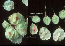 fruit (seeds), comparison