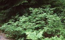 plant in habitat