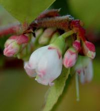 flower and flower buds
