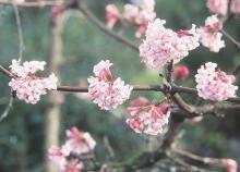 flower clustsers
