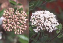 buds and flowers