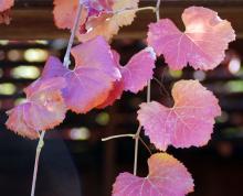 leaves, late fall
