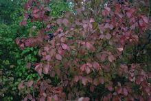 plant habit, fall, exposed aite