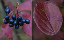 plant habit, fall, exposed site