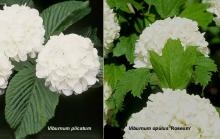 leaves and flowers, comparison