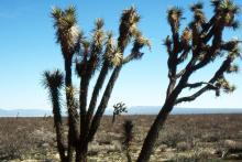 plant habit, in habitat