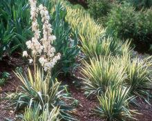 plant habit, end of flowering