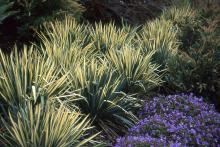 plant habit, early fall