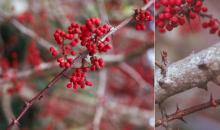 fruit and spines, winter