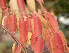 leafy shoots, fall